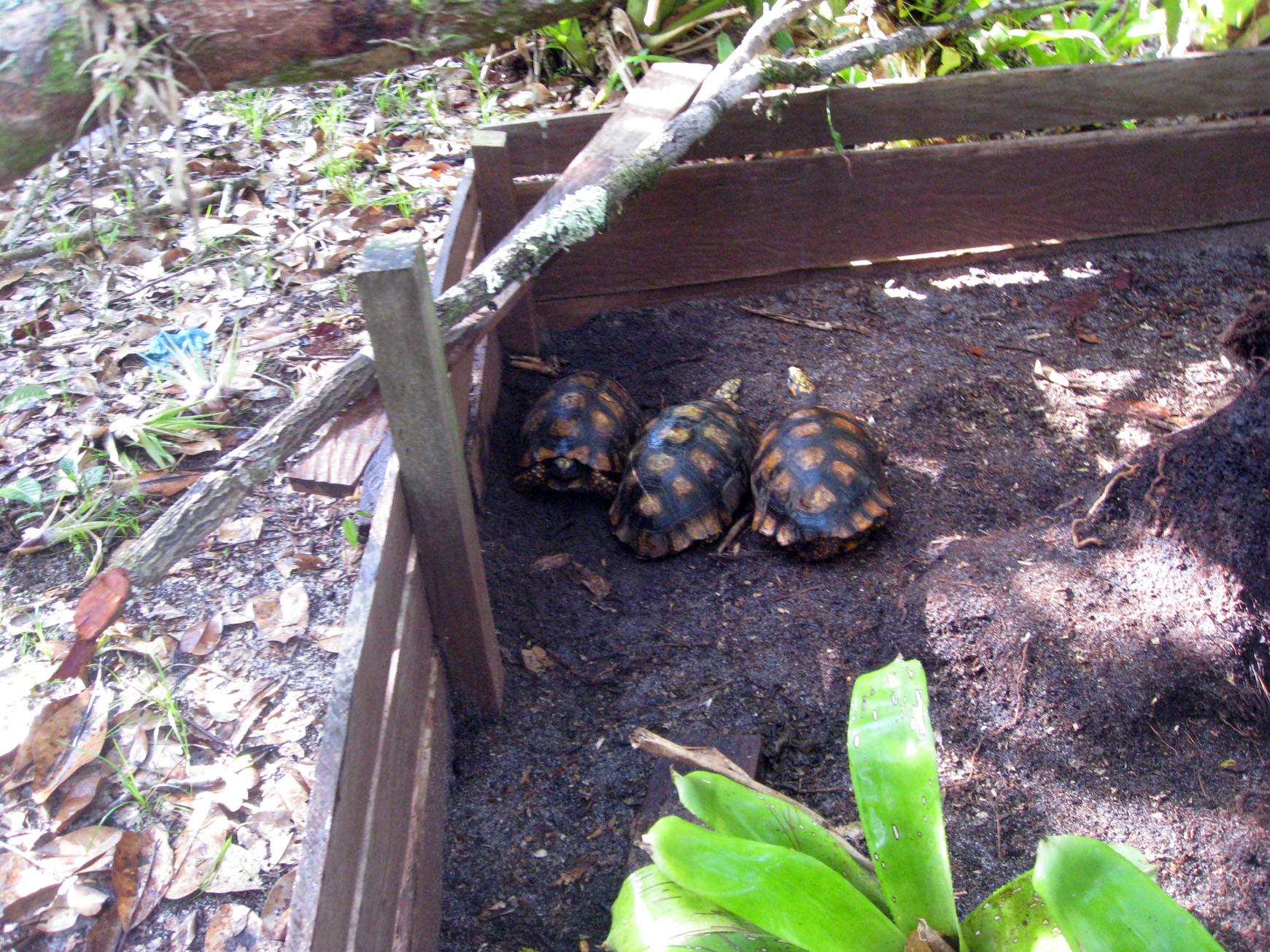 Загон для черепахи на даче своими руками